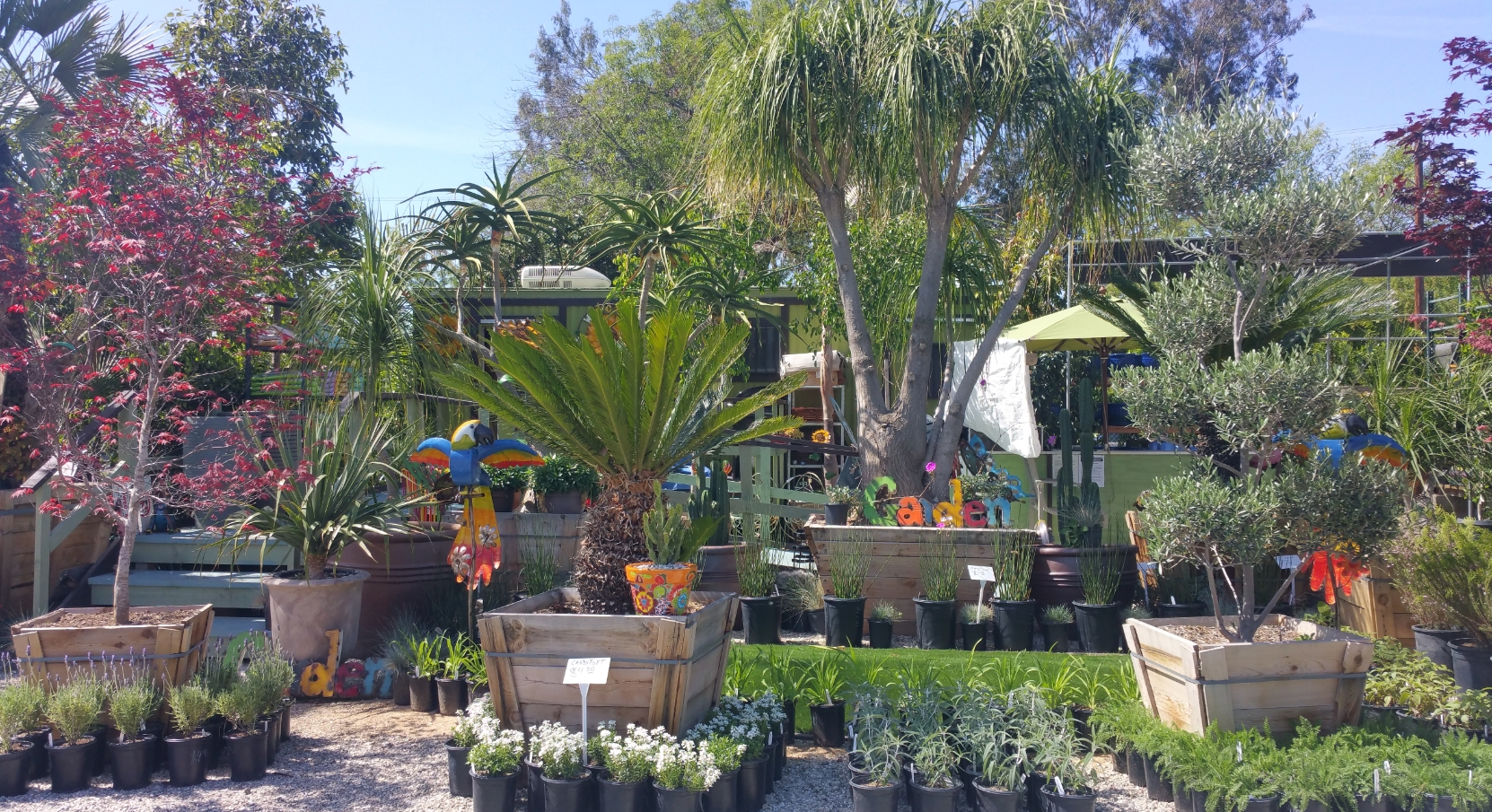 plants-and-trees-pasadena-nursery